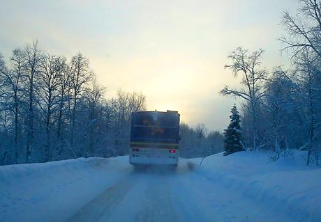 Gärjahbusse. Foto: Marie Persson Njajta